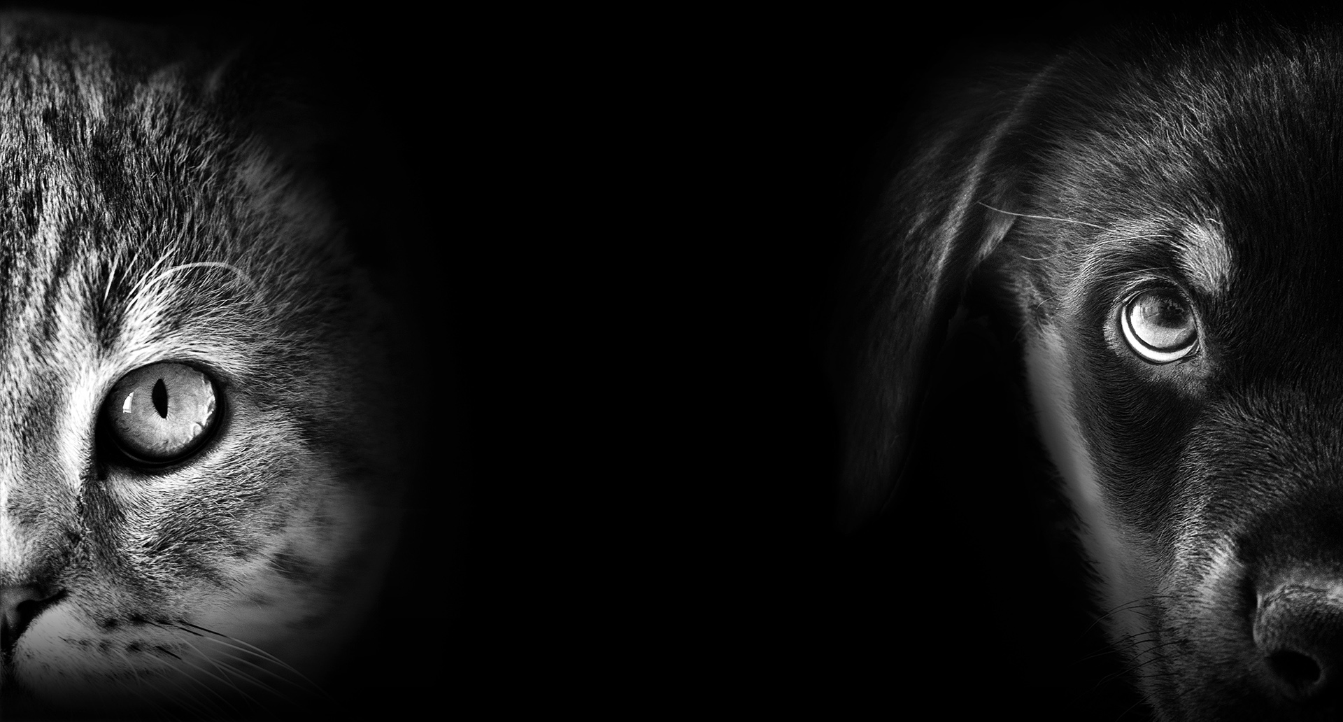 cat and dog portrait in dark