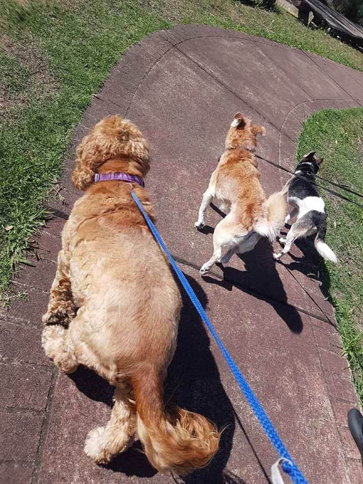 Fairford Road Animal Hospital Dog Walking