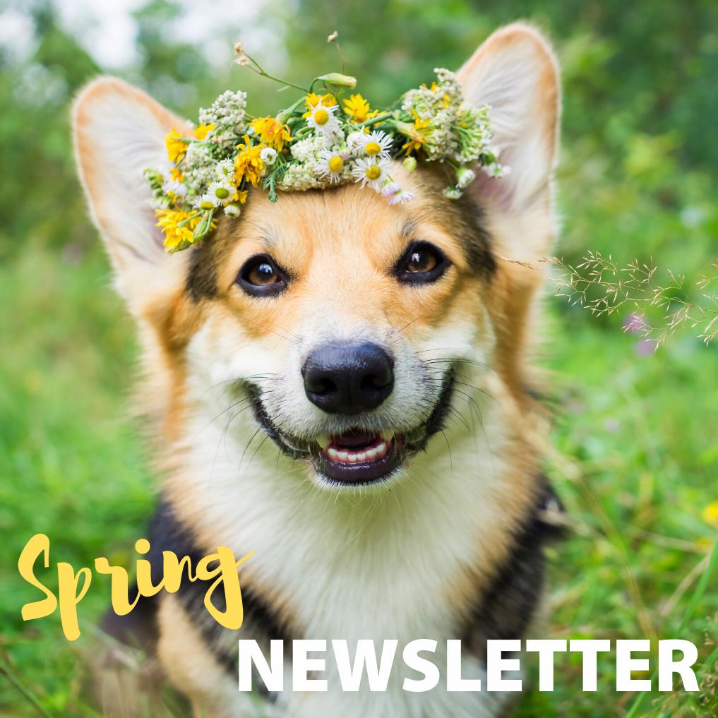Fairford Road Spring Newsletter