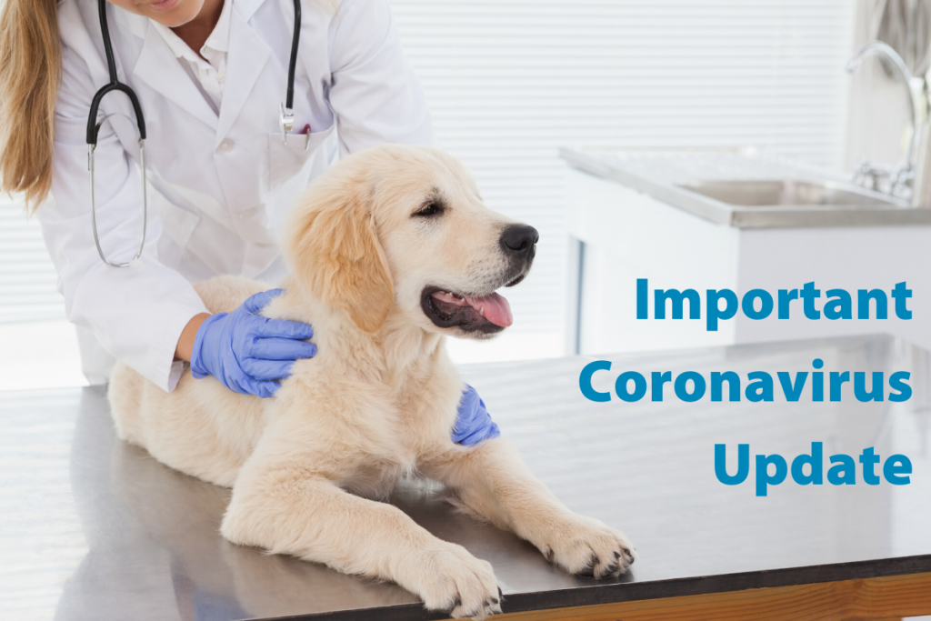 Fairford Road Animal Hospital Coronavirus