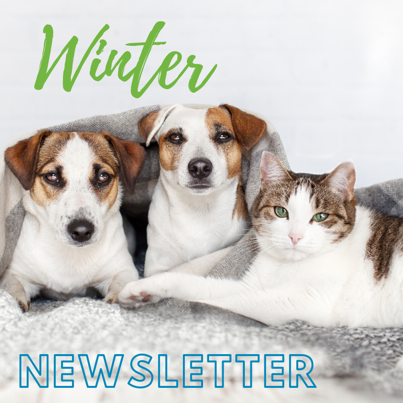 Fairford Rd Animal Hospital Winter Newsletter