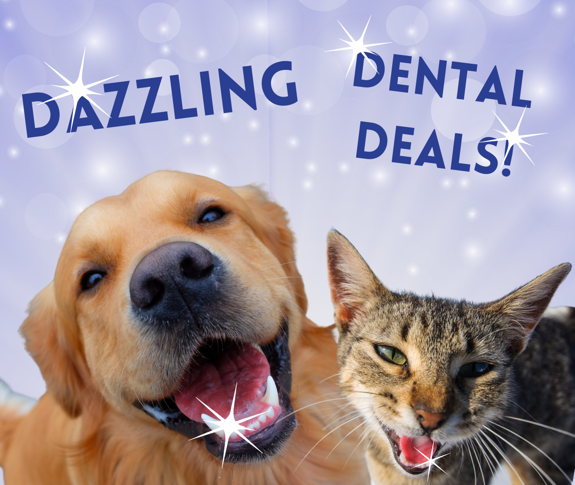 Dental Month Fairford Road Animal Hospital